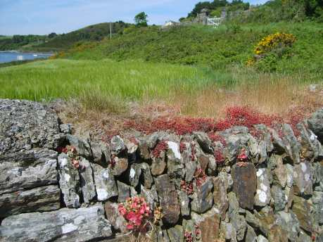 THE GRAVEYARD AT KINURE, NEAR OYSTERHAVEN