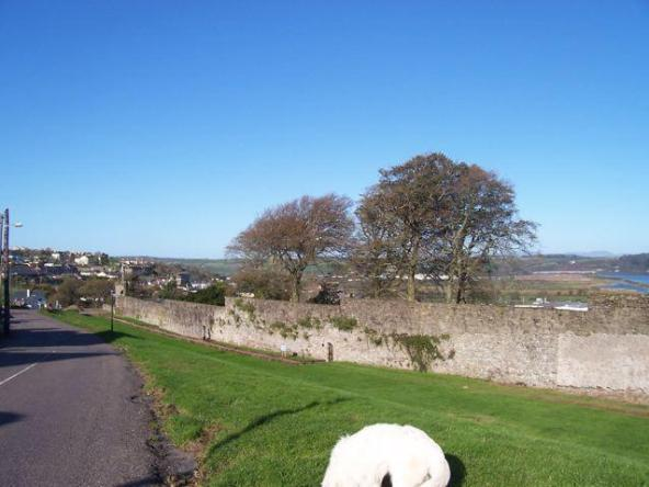 YOUGHAL TOWN WALLS showing repair carried out in the 1970's; the green area represents the moat on the western side of the walls. Photo by K. Donnelly